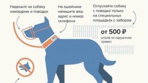 Выгул собаки без намордника и поводка статья коап рф