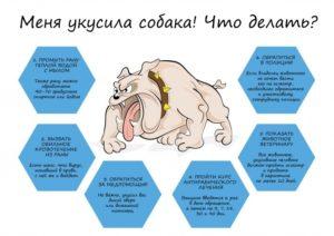 Если покусала собака что делать куда обращаться