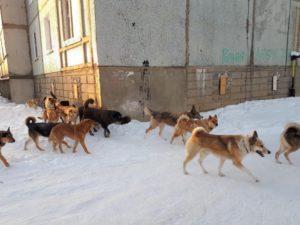 Письмо по отлову бродячих собак образец