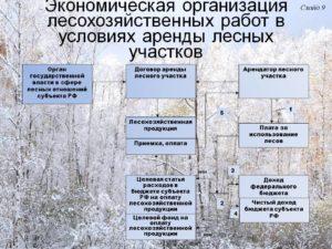 Должностная инструкция инженера по лесопользованию и лесовосстановлению арендаторов лесного фонда
