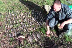 Сколько раков можно ловить по закону в саратовской области