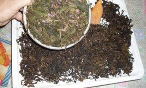 Выгодно ли выращивание иван чая