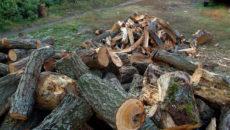 Почему нельзя пилить сухостой в лесу на дрова